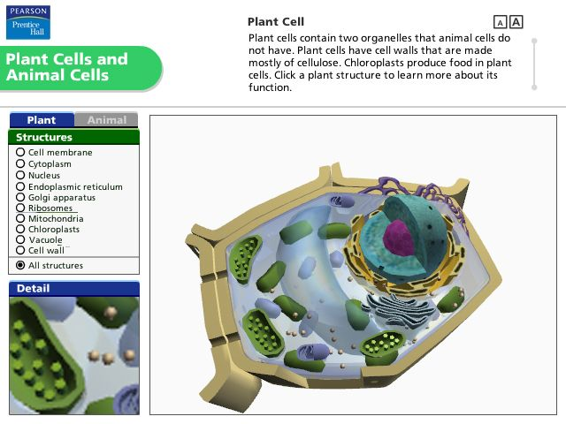 Pearson Education Virtual Science Experiments by ForgeFX Simulations, Plant Cells and Animal Cells Simulation
